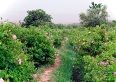 08-MARRAKECH-TOURS-EXCURSIONS-GALLERY