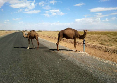 57-MARRAKECH-TOURS-EXCURSIONS-GALLERY